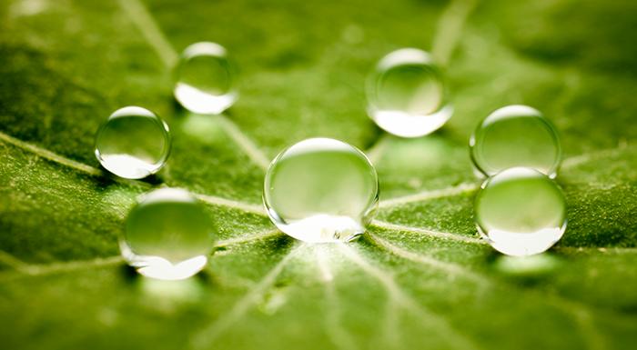 Droplets on a leaf